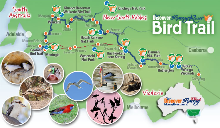 Discover Murray River Bird Trail map