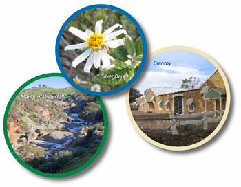 Mannum Waterfalls, Silver Daisy, Glenroy Homestead