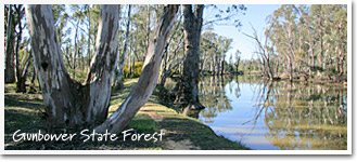 Gunbower State Forest