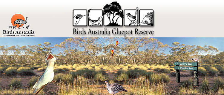 Birds Australia Gluepot Reserve Near Waikerie In Riverland