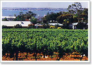 Barmera vineyards