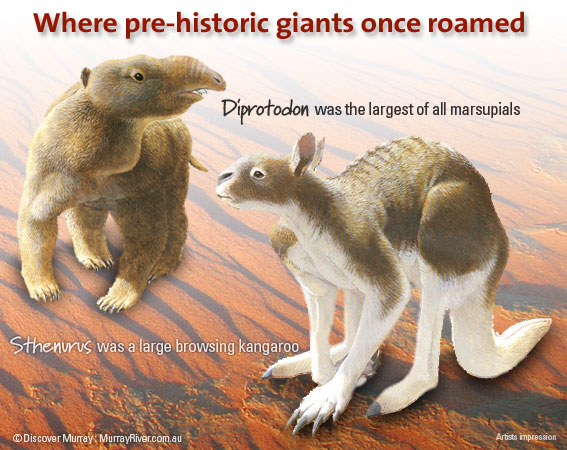 Where pre-historic giants once roamed. Megafauna of the Murray River Basin
