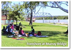 Families relaxing on the foreshore at Murray Bridge
